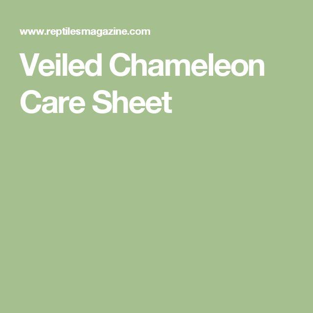 Veiled Chameleon Care Sheet