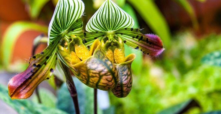 Regula generală și reguli speciale de udare corectă a orhideelor | Paradis Verde