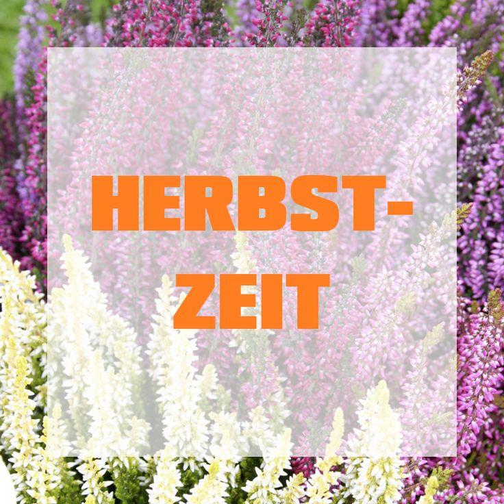103 best Herbstzeit images on Pinterest Candles, Decorating - herbst deko ideen fur ihr zuhause