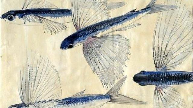Le musée Mathurin-Méheut accueille une centaine d'œuvres du peintre lamballais, du 1er avril au 31 décembre 2010. Elle montre comment Mathurin Méheut a su