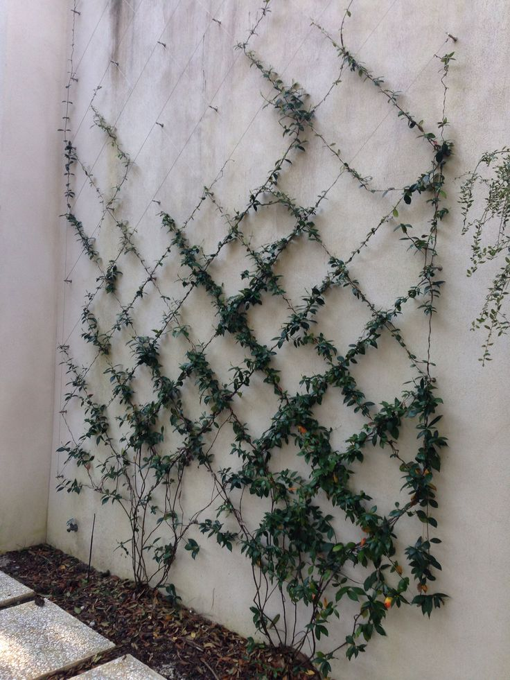 Cable Wire Trellis Water Residence Pinterest Wire