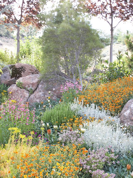 Drought-Tolerant Rock Garden Drought-tolerant plants and rock gardening are natural partners. Many rock garden favorites can stand up to harsh conditions and don't require much care. It's easy to achieve a lush look without extra watering by paying close attention to plant choices. Plan to pair plants native to your region with eye-catching favorites like silvery lavender, artemisia, and dianthus.