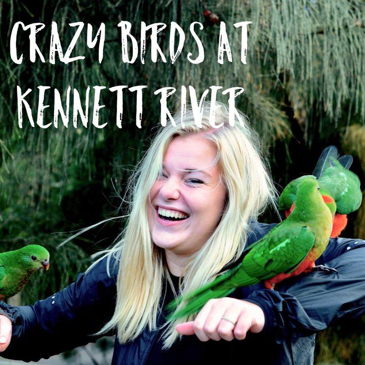 Crazy Birds at Kennett River