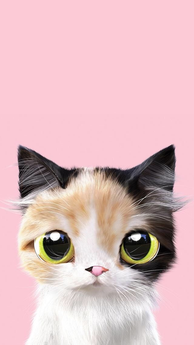 Cat Phone Wallpaper Cute Cell Wallpapers Mobile Backgrounds Iphone