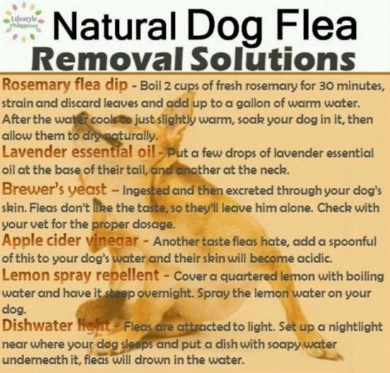 Natural+Flea+Remedies                                                                                                                                                     More