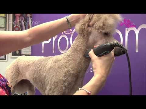 ▶ Grooming Guide - Standard Poodle Miami Trim - Pro Groomer - YouTube