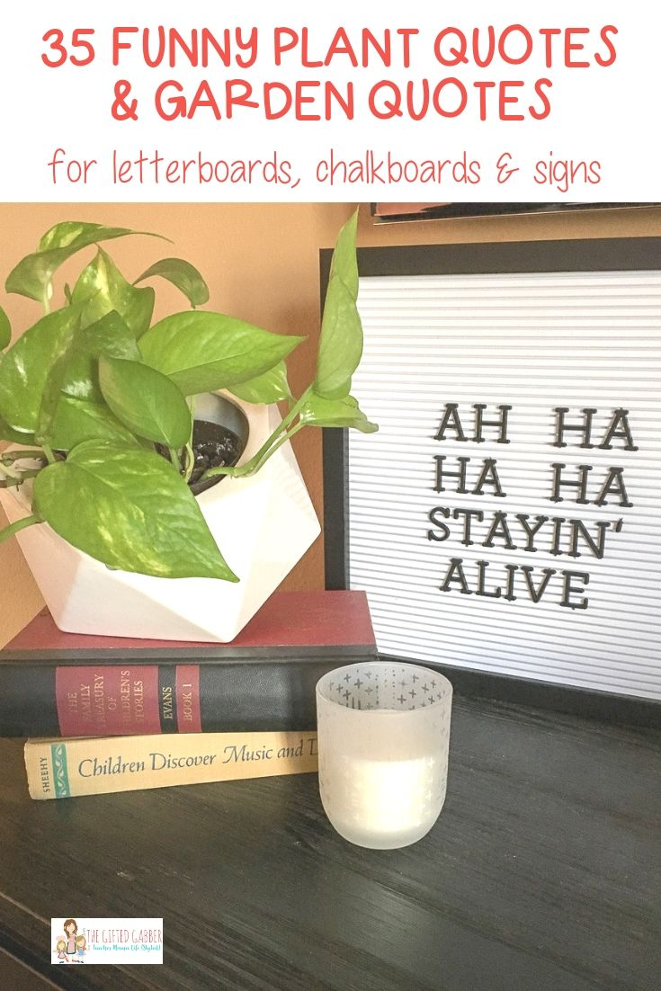 35+ Funny Plant Quotes Funny Garden Quotes The Gifted