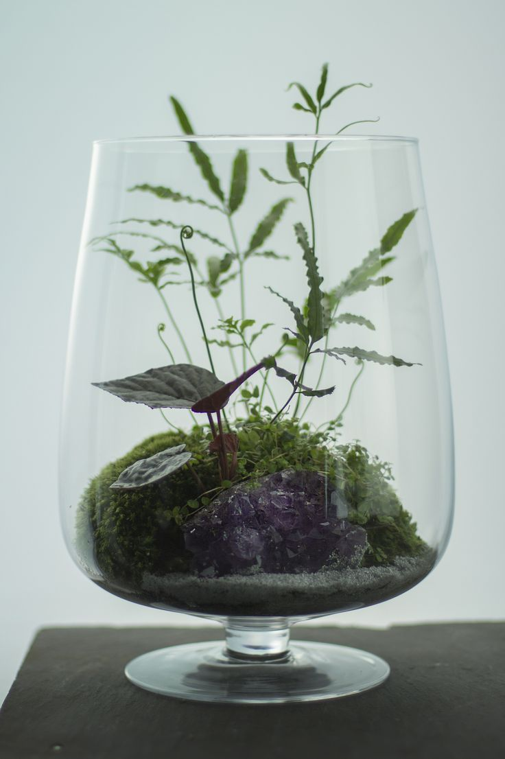 how to build a bonsai terrarium