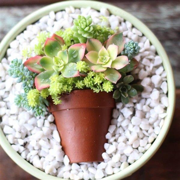 Charming Succulent Pot In A Pot Ideas In 2020 Succulent Pots Succulents Succulent Gardening