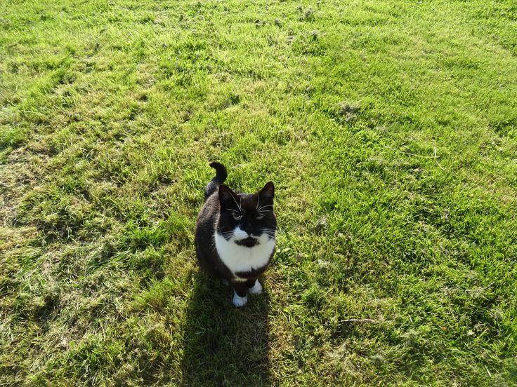 Jip #cat