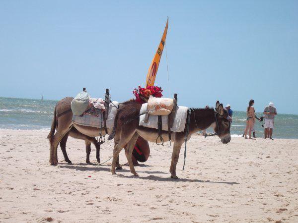 Passeio de burro em Canoa Quebrada