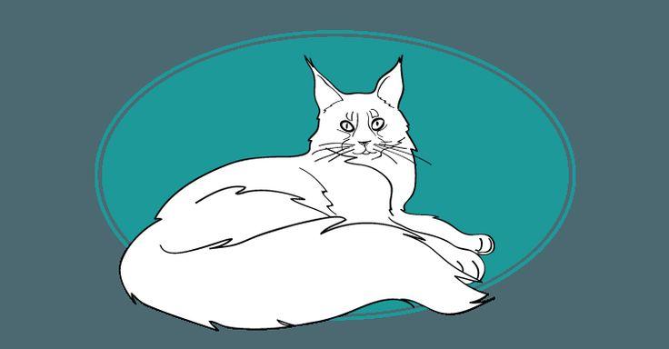 Le Maine Coon vient des Etats-Unis. Avec une taille de 110 cm il est l'un des plus grands chats domestiques. Il est très sociable et s'amuse beaucoup avec les enfants. #chat #cat #gatto #mainecoon #mutuelleanimaux. Pour plus d'informations, rendez-vous sur http://www.assuropoil.fr/races-de-chats