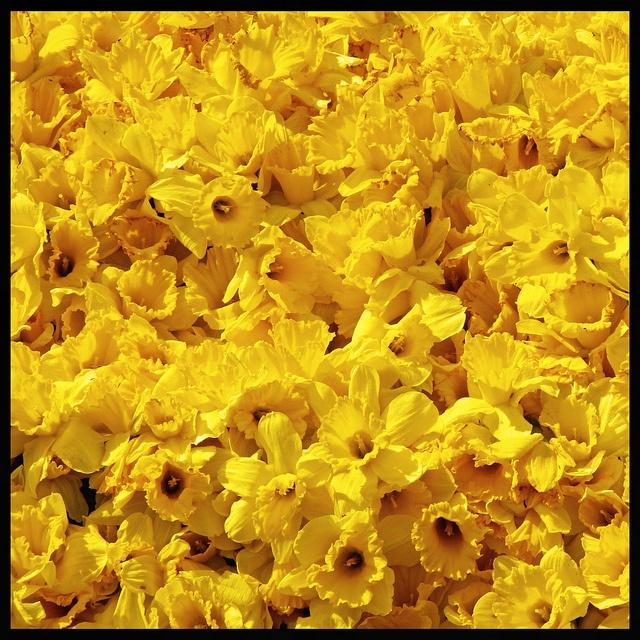 Yellow heaven