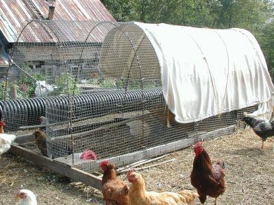Chicken Hoop House | Sugar Mountain Farm