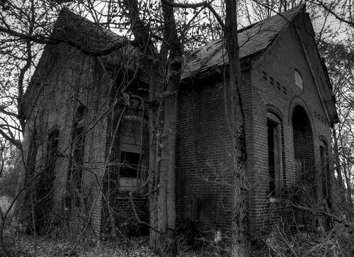 Dark Forest Photograph...