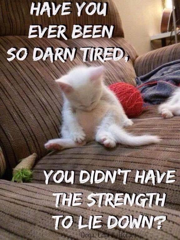8a722acb1142915ed6e7961b5dc30229 chronic illness chronic pain 689 best invisable illnesses images on pinterest chronic pain,Positive Chronic Illness Memes