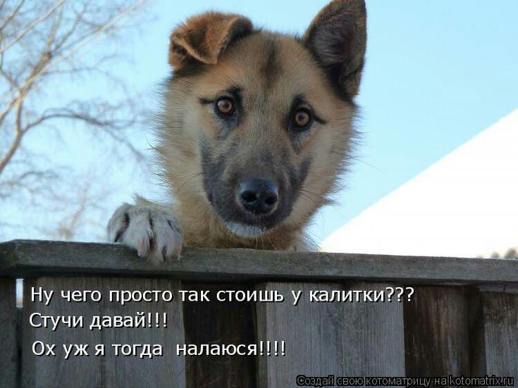 Картинки смешные с надписями про собак, рисунки