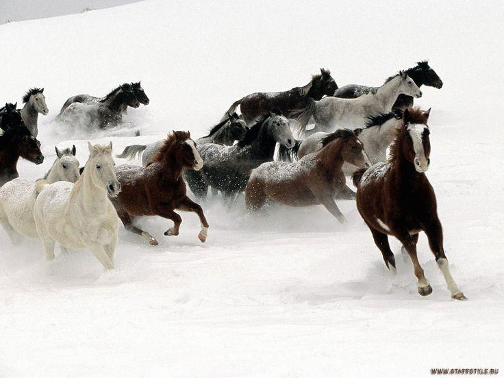 Mustang Horse | обои Мустанги Лошади, wallpaper mustangs, stallions