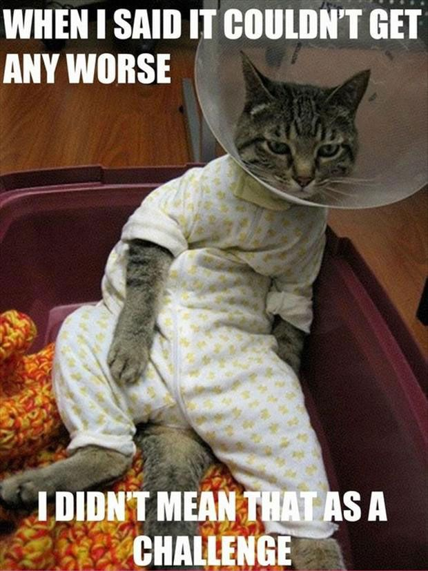 funny cat pictures with captions funny cat pictures with