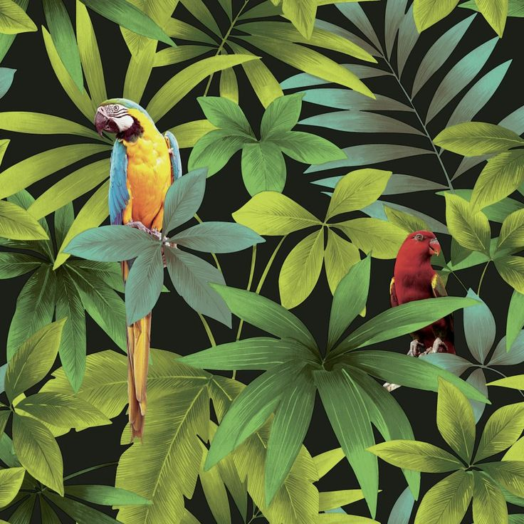 Parrots Black wallpaper by Albany