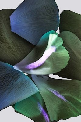 Artistic photograph of blue and green flower petals. Available as poster at printler.com, the marketplace for photo art. Photographer Ylva Wikström