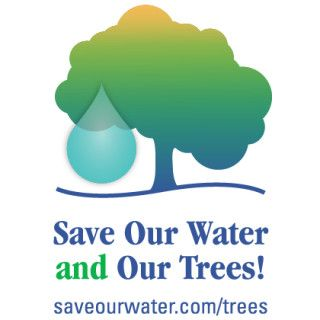 Why and how to save our trees during the drought, from California's Save Our Water.