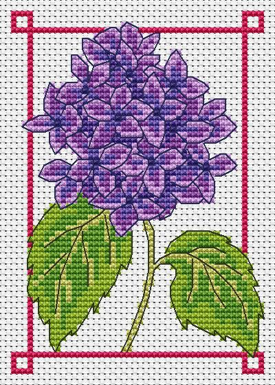 Amanda Gregory cross-stitch design: August hydrangea free cross stitch chart