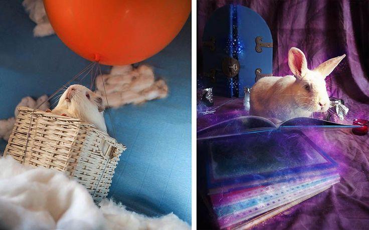 Каждый год итальянский фотограф Ракель Тотаро (Rachele Totaro) старается помогать местной благотворительной организации «La Collina dei Conigli» тем, что создает снимки животных, спасенны…