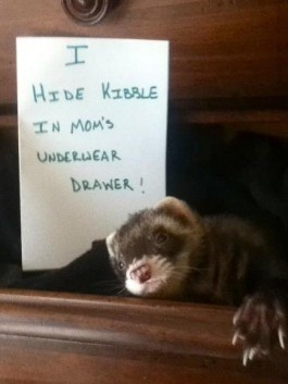 Pet Shaming: I hid kibble in Mom's underwear drawer.  (link leads to lots of other shaming pictures)
