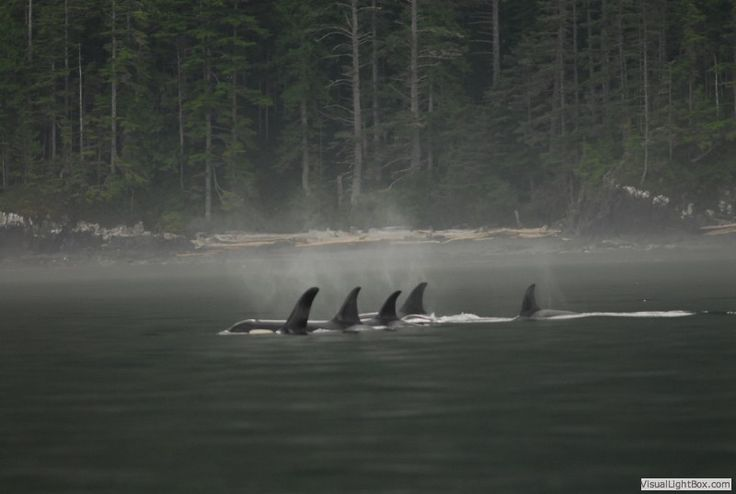 Marine wildlife photography, photgraphing whales in the wild