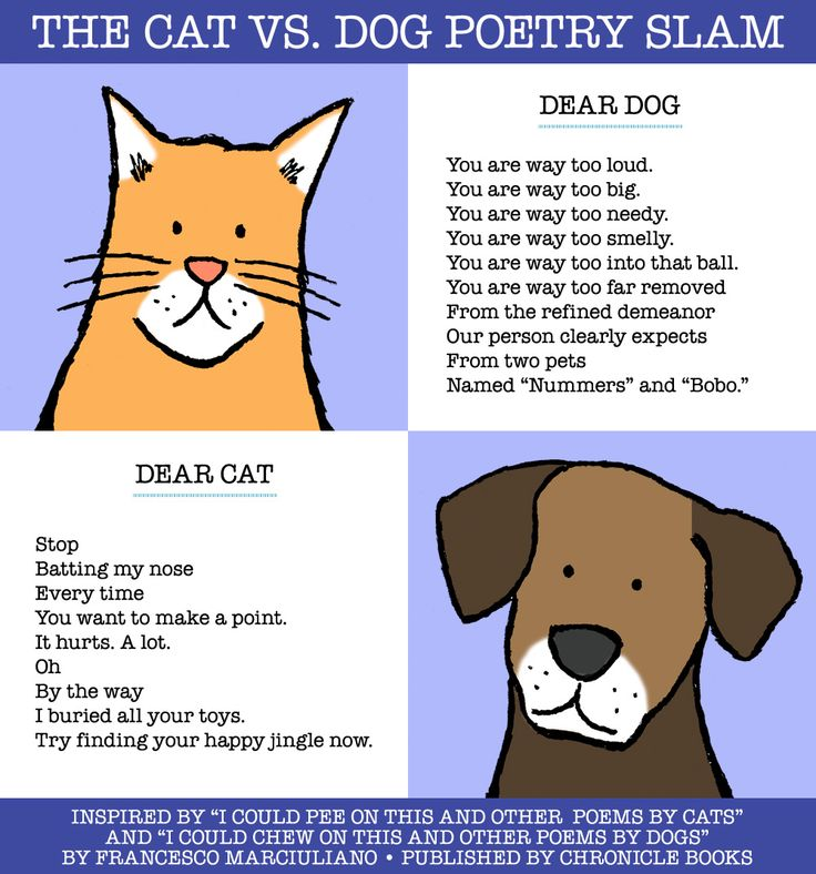 compare and contrast essay about cats and dogs