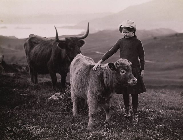 The year 1918: A girl pets a calf in Scotland | William Reed
