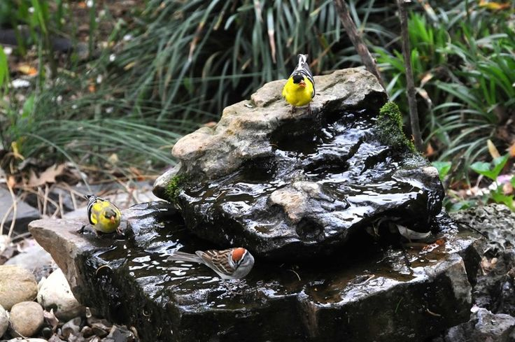 Bring In the Birds With a Homemade Bubble Rock An avian expert from Southern Indiana shows how to make a burbling fountain that migrating birds will love.