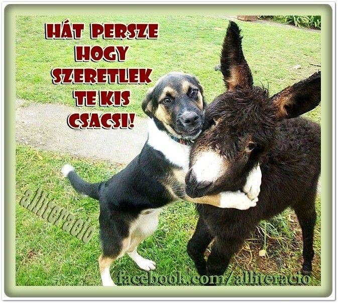 vicces, humoros, aranyos, állatok, képek, kutya, csacsi, cuki,