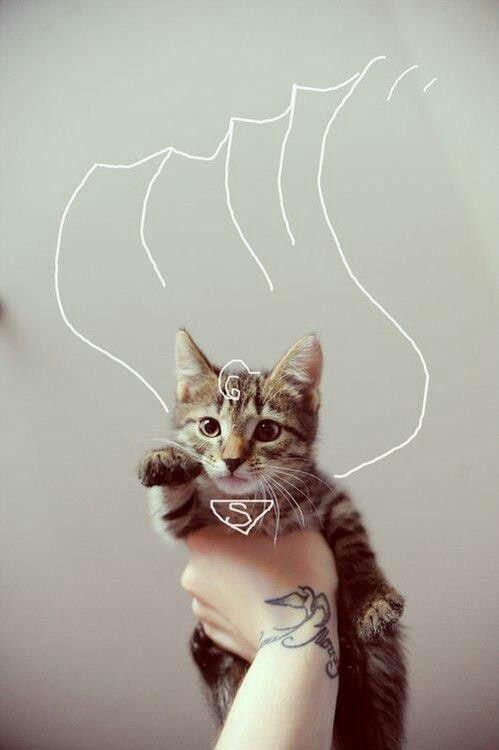 Super-cat