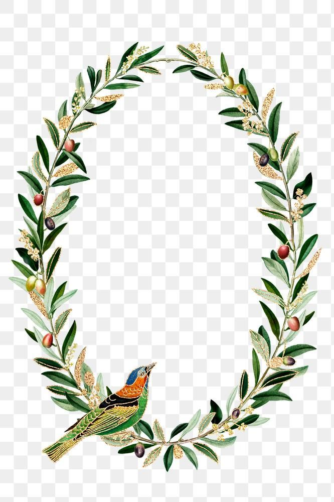 Hummingbird Pattern Frame Png Olive Branches Copy Space Free Image By Rawpixel Com Noon Olive Branch Wreath Olive Branch Png