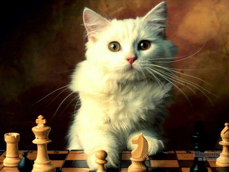 Life is a Video Game 8a76cd5dd53ff4b54aedef4d5b3ed6b9