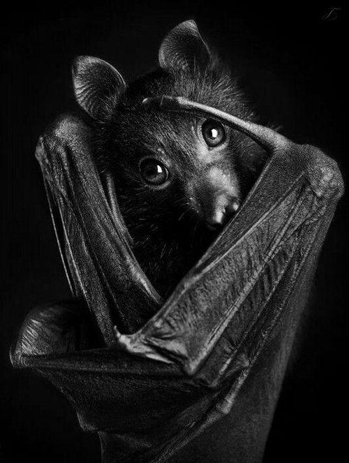 Beautiful ✦❥ Black ❥✦ Bat
