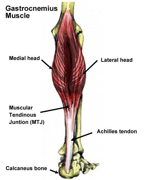 how to develop calf muscles