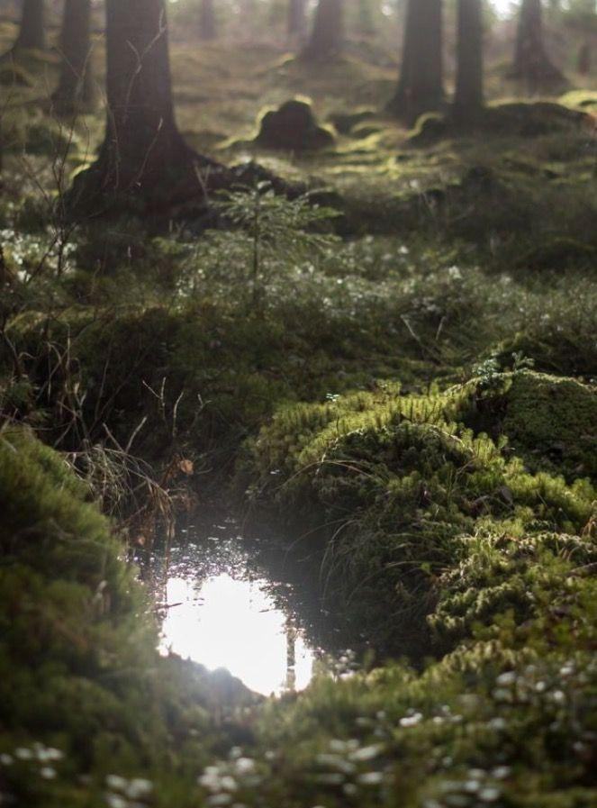 T H E _ C O L L E C T O R #LandscapeForest