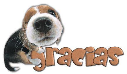 """Desgarga gratis los mejores gifs animados de gracias. Imágenes animadas de gracias y más gifs animados como animales, angeles, besos o nombres"""""""