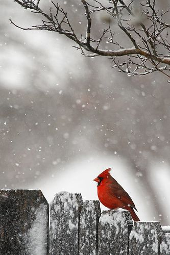 Little fellow in the red suit on Christmas Day! by rsheath76, via Flickr
