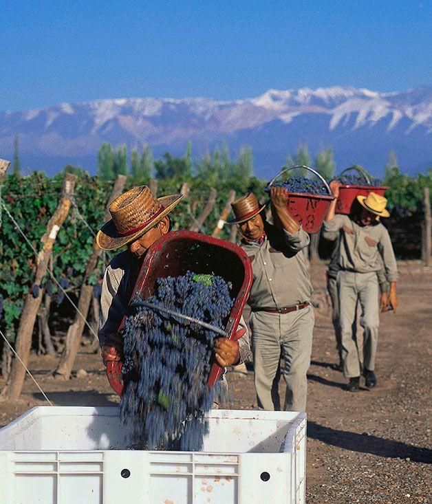 Región vinícola  de Mendoza  Argentina