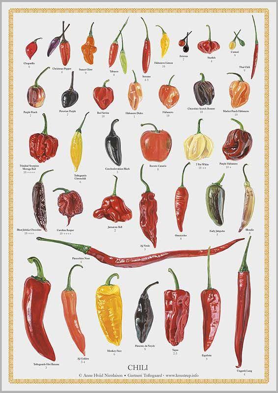 CHILI plakat med 38 sorter udvalgt af Lene Tvedegaard og malet af Anne Hviid Nicolaisen