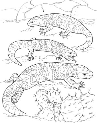 three gila monsters coloring page