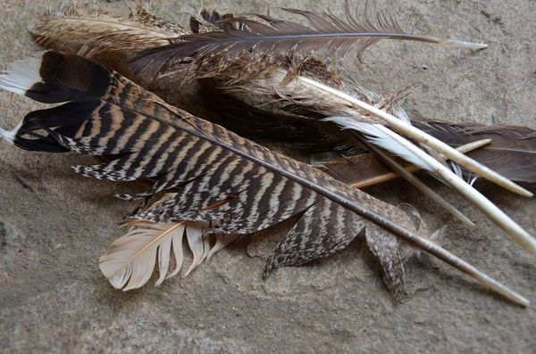 How to Cut Your Own Feathers for Survival Arrow Fletchings | Outdoor Life