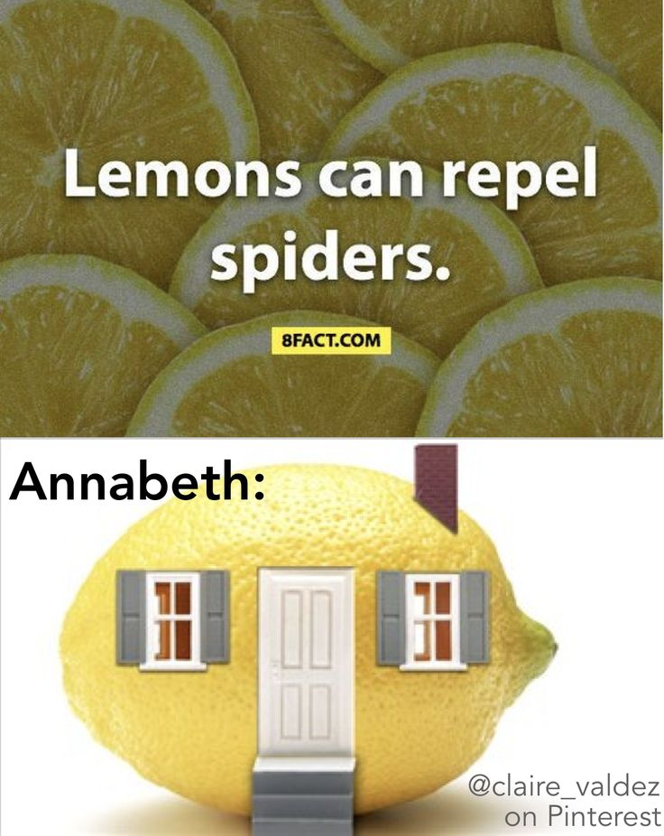 Lemons can repel spiders | 8fact | Annabeth Chase