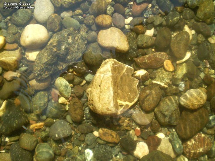 Velonias stream - Ρέμα Βελονιά www.facebook.com/greveniotes