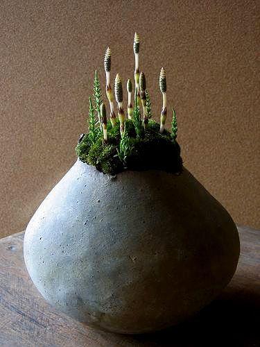 #ikebana #生花 #bonsai #盆栽 (Via:Ikebana nirvana – Japan floral arts) おぉ...なんか、かっこいいな!