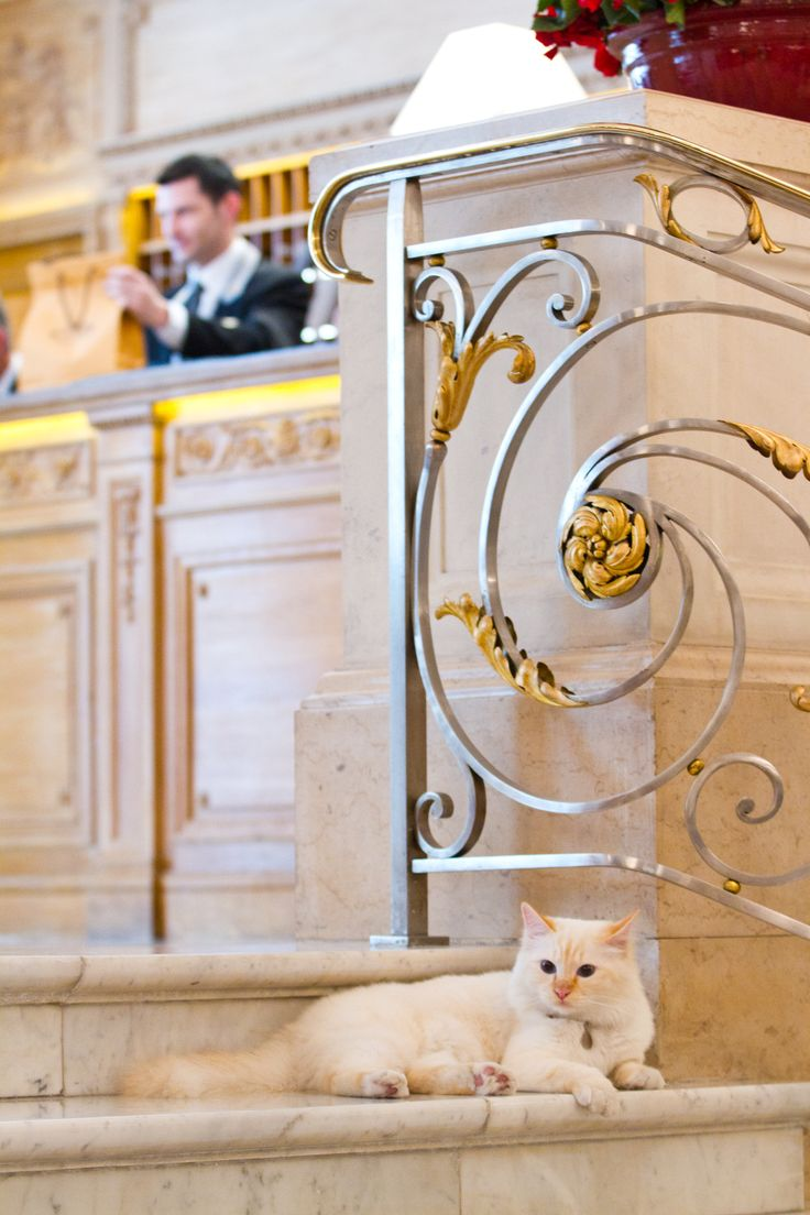 """""""Now this is class!"""" --- Parisian hotel cats   Royal Welcome at Hôtel Le Bristol Paris   The Bespoke Black Book"""